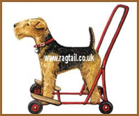 Ann Curran artist and owner of four Airedale dogs