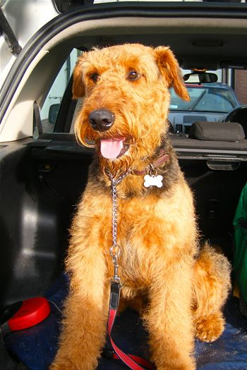 Mr Harold has been found a new home by Airedale Rescue