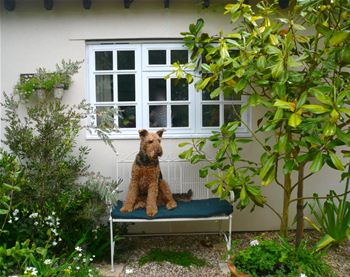 Oscar the Airedale Re-homed